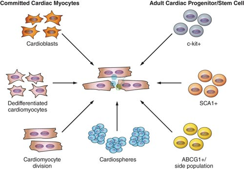 CHF-Cardiac-Cell-Replacement