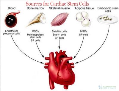 sources-cardiac-stem-cells