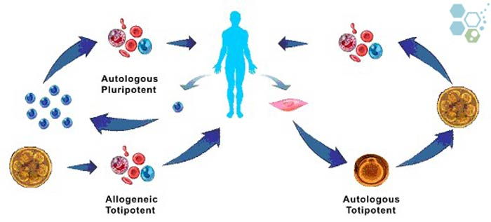 aulogous stem cells