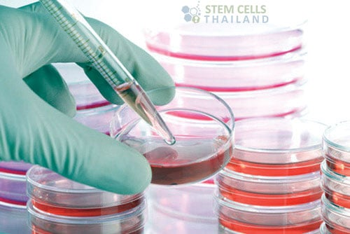 cell-culture-growth-medium-cell-culture-medium