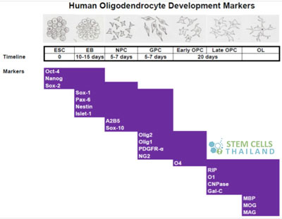 embryonics-stemcell-markers