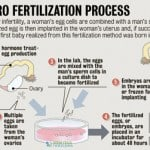 In Vitro Fertilization & Artificial Insemination in IVF Screenings