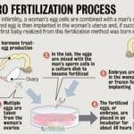 In Vitro Fertilization & Artificial Insemination in IVF Screenings