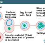 History of Reproductive Cloning and Therapeutic cloning for Humans