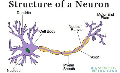 neurons-brain-injury-therapy