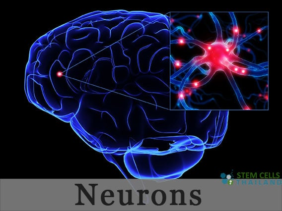 neurons-stem-cell-therapy