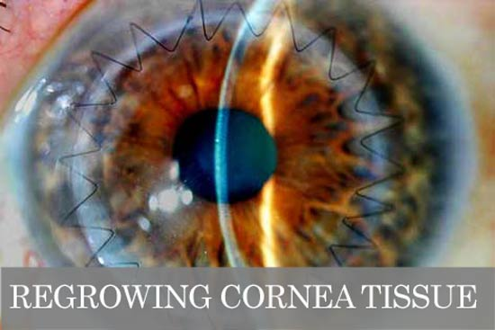 cornea regeneration stem cell optical