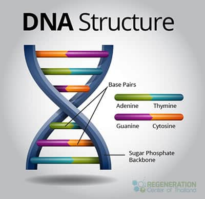 dna-structrue