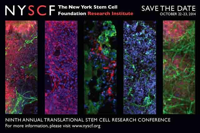 new-york-stem-cells