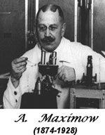 Dr-Alexander-A.-Maximow