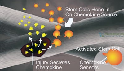 chemokines-stemcell-face-antiaging