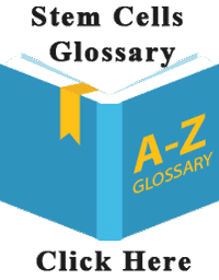stem-cell-glossary