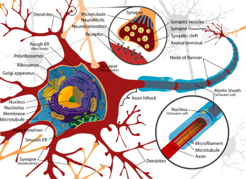 Stem Cell Treatment For Motor Neuron Disease