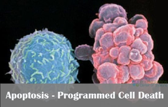 Apoptosis And Programmed Cell Death Pcd