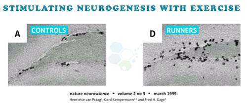 controlling-neurogenesis