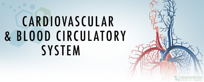 Cardiovascular and Blood Circulatory System