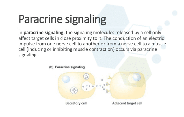paracrine_signaling