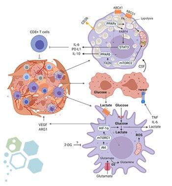 tumor-microenvironment